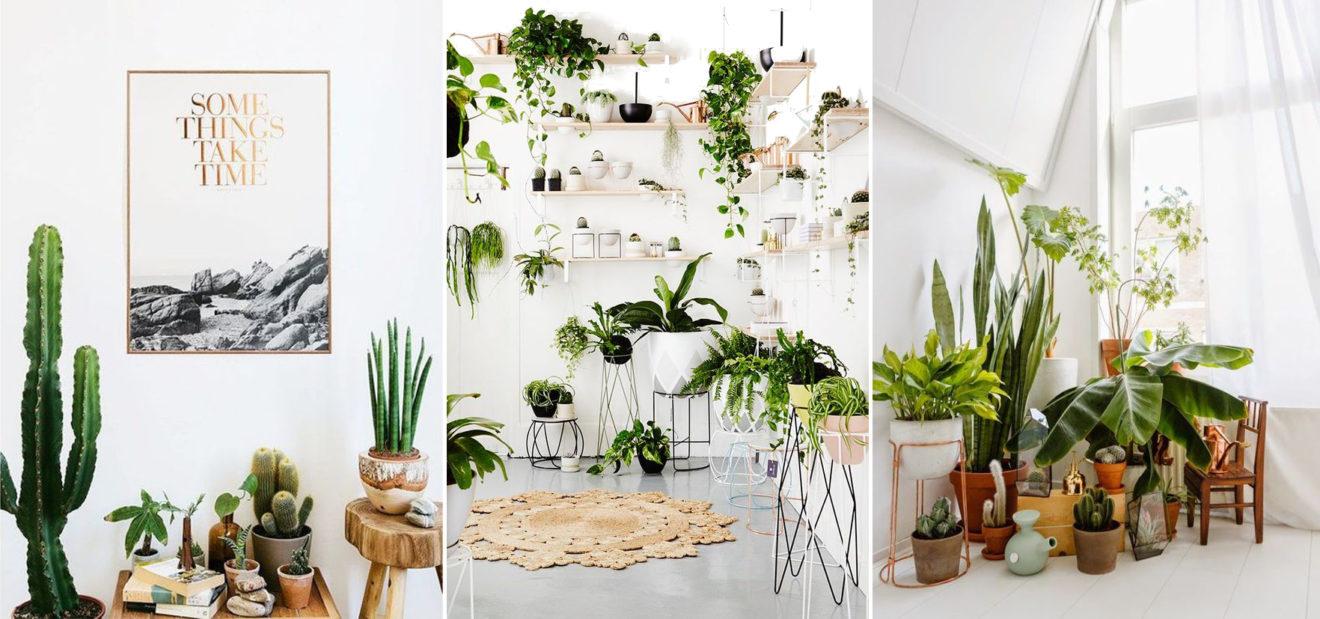 Déco végétale tropicale