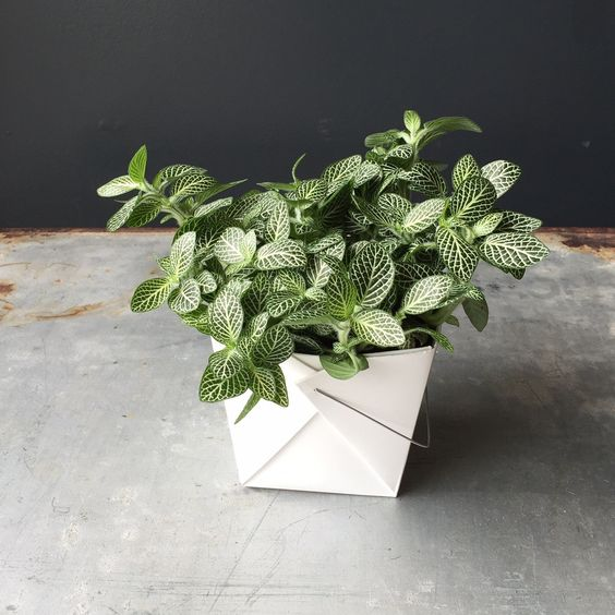 Quelles plantes d 39 int rieur choisir pour une rentr e 2016 - Quelles sont les plantes que l on peut bouturer ...